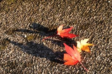 秋の情景201911(5)