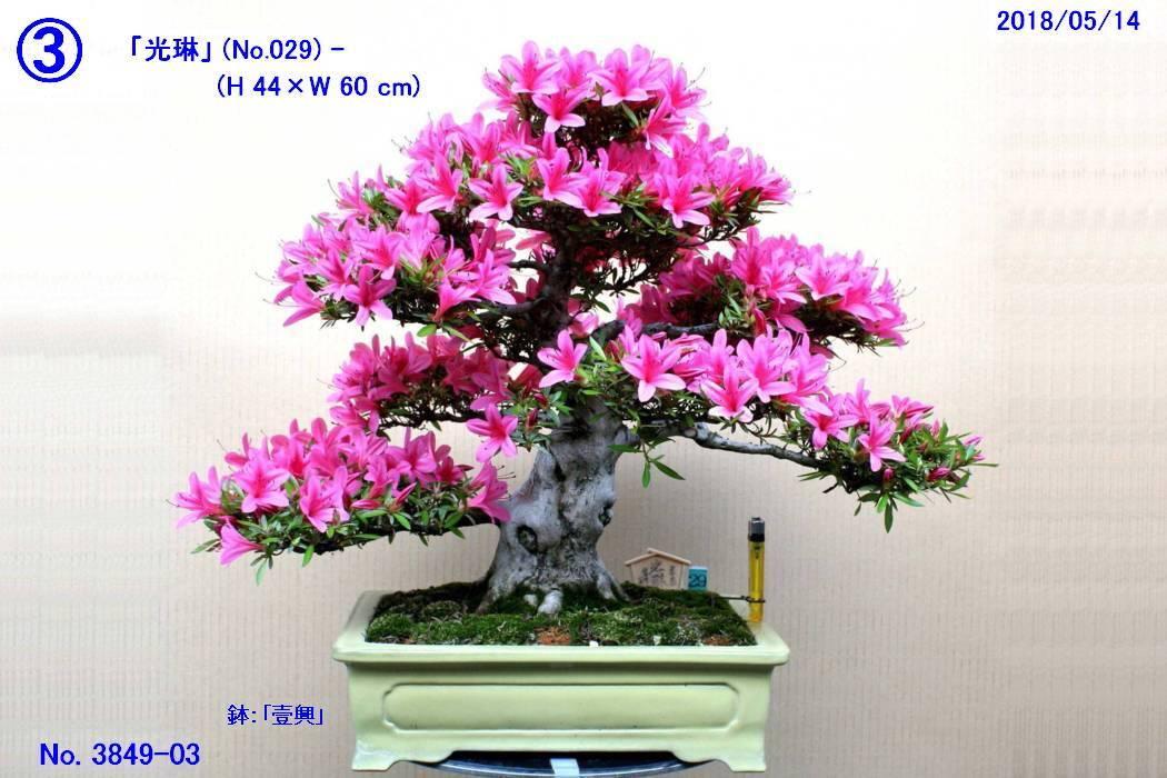 FC0233-04.jpg
