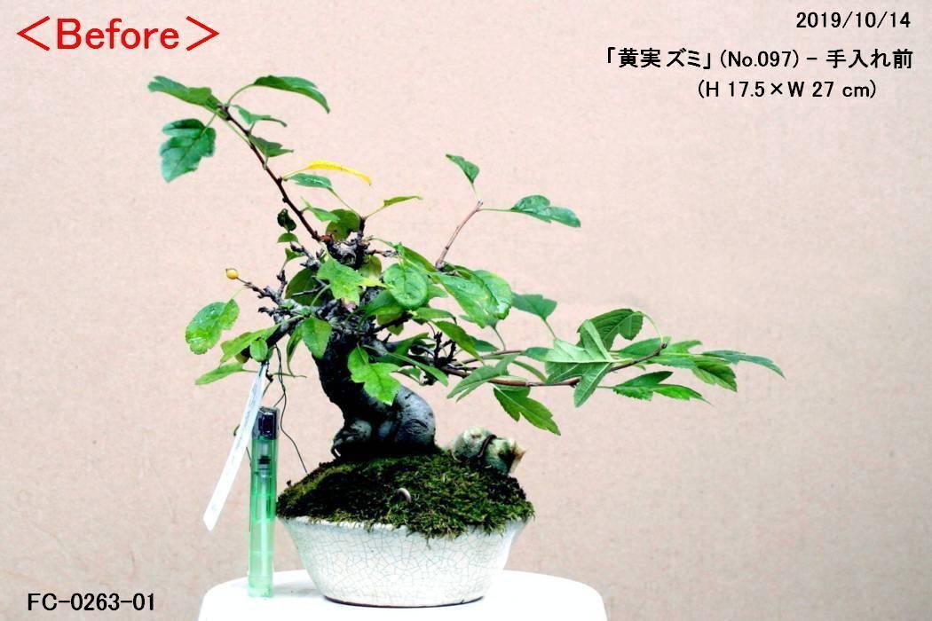 FC0263-01.jpg