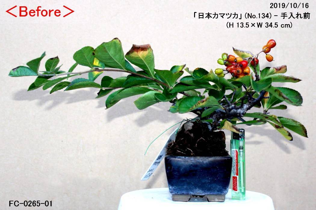 FC0265-01.jpg