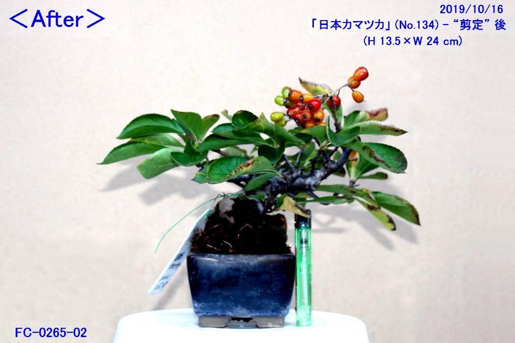 FC0265-02.jpg