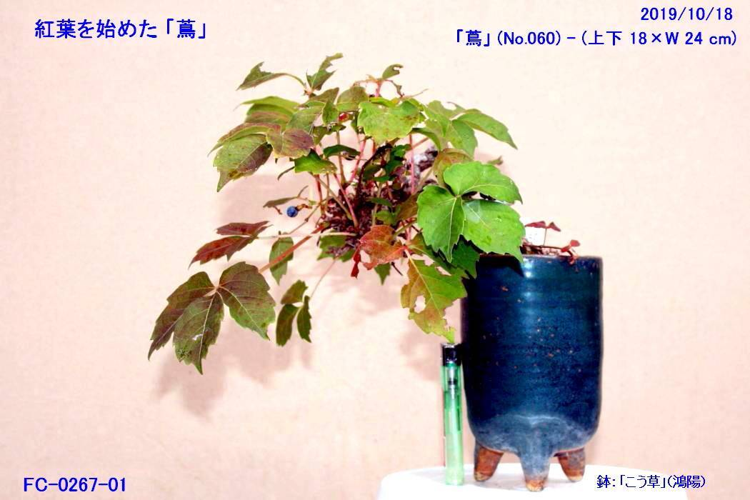 FC0267-01.jpg