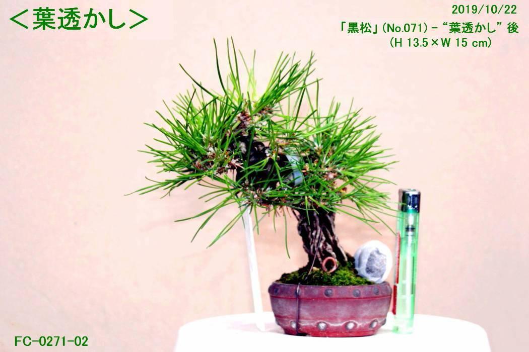 FC0271-02.jpg
