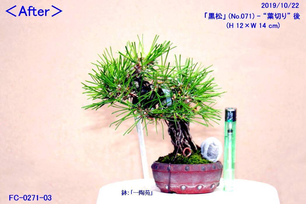 FC0271-03.jpg