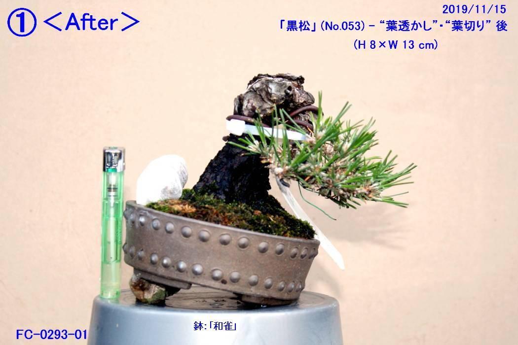 FC0293-01.jpg
