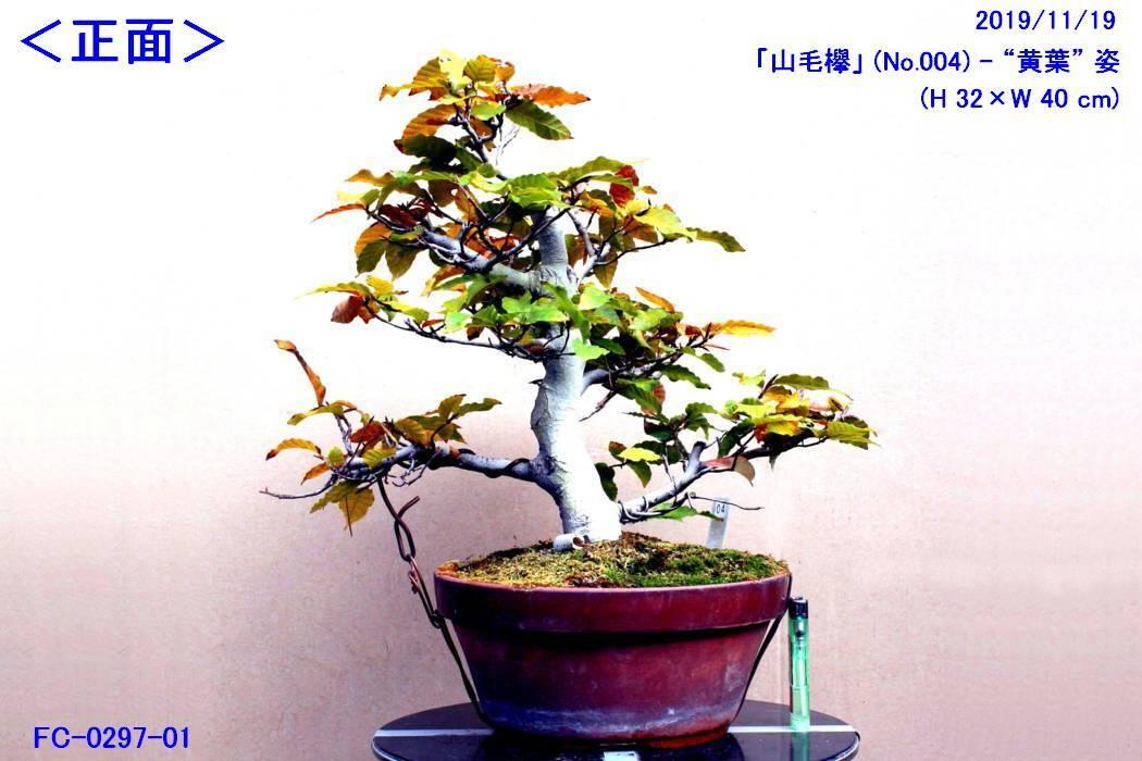 FC0297-01.jpg