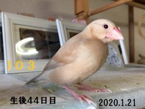 IO3シナモン