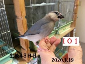 IO1 サクラ男子