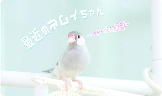 『最近のネムイちゃん』へ