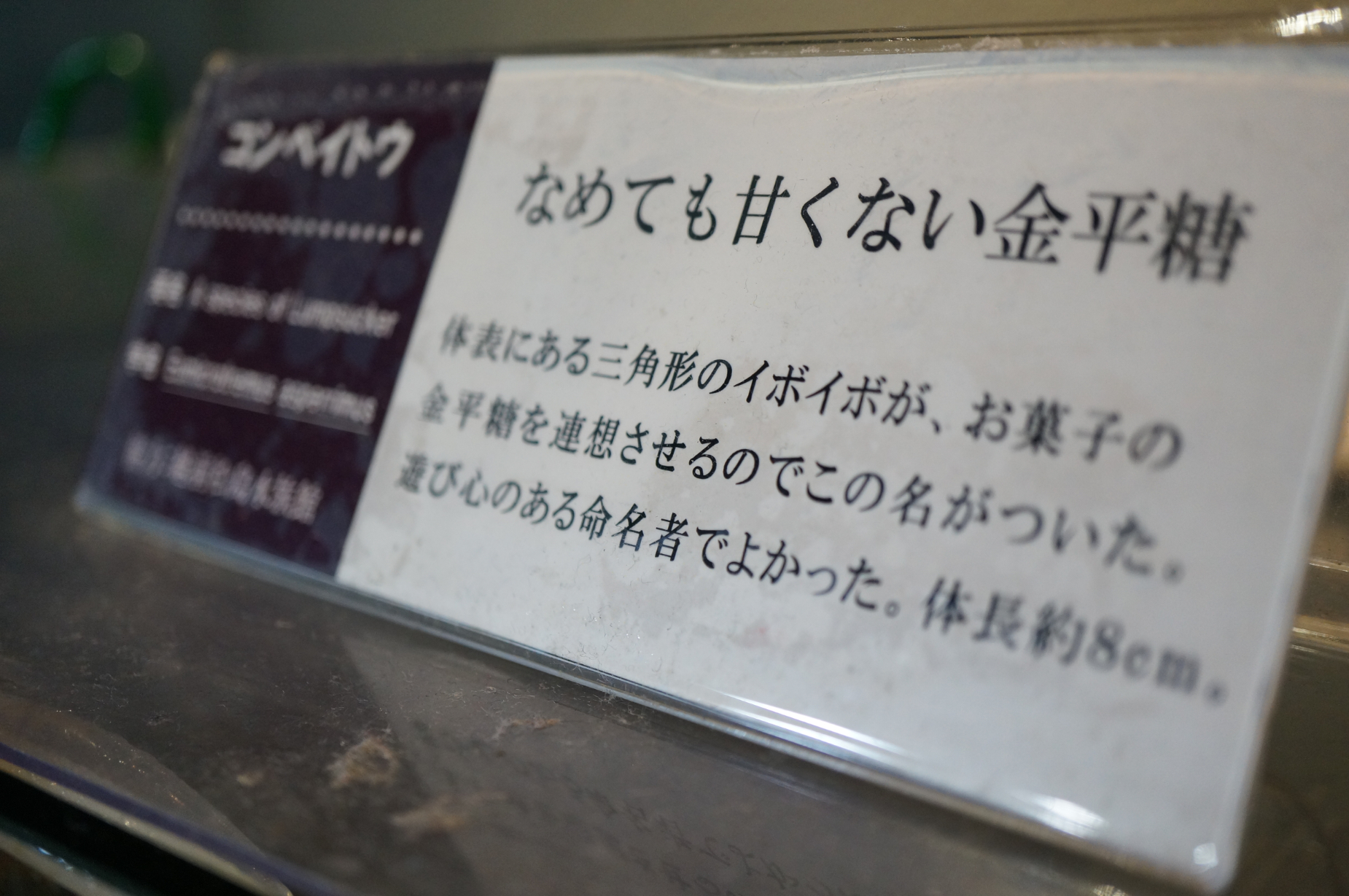 DSC07546.jpg