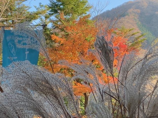 箱根湿性花園20191125-10