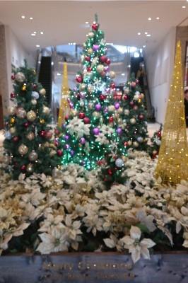 AEONクリスマスツリー1