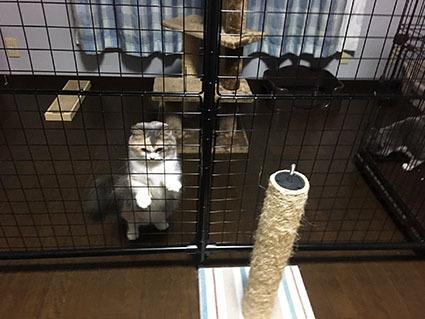 ペット→猫