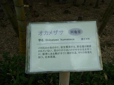shukusho-RIMG0446_20190831173754dc6.jpg