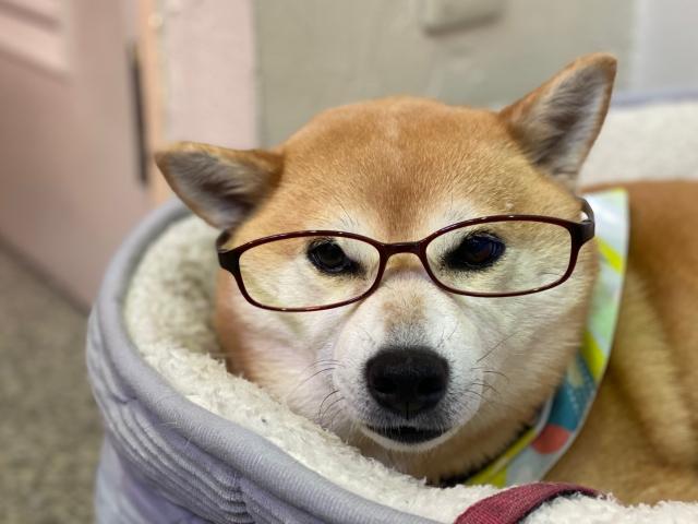 glasses_1519.jpg