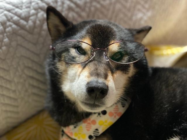 glasses_1593.jpg