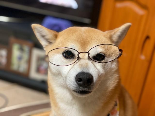 glasses_1596.jpg