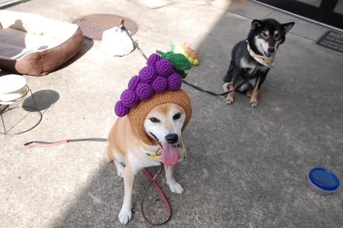 grapes_0407.jpg