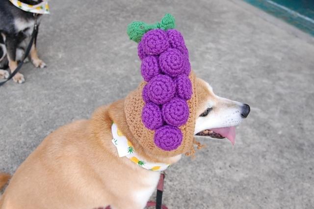 grapes_0410.jpg