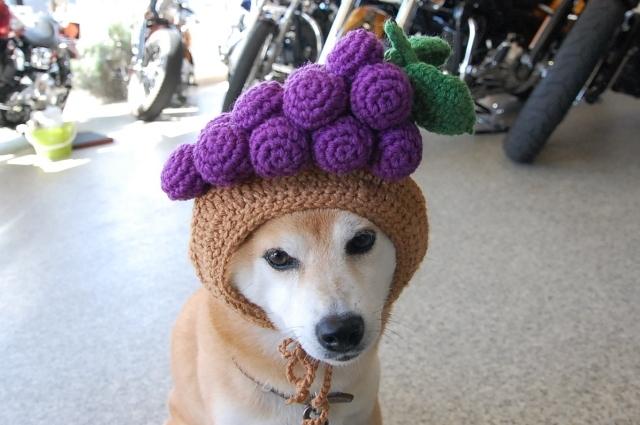grapes_0442.jpg
