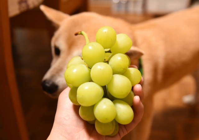 grapes_6943.jpg