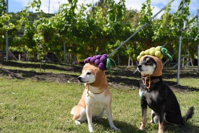grapes_7106.jpg