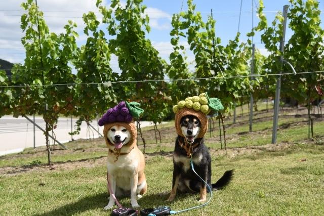 grapes_7134.jpg