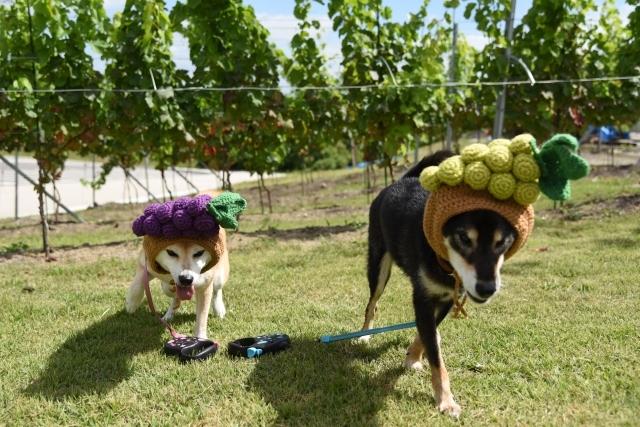 grapes_7142.jpg