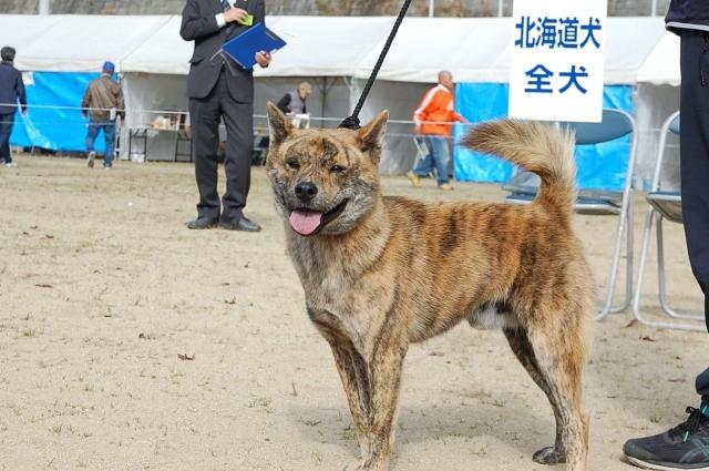 nippojoshibu_0993.jpg