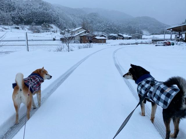 snow_1345.jpg
