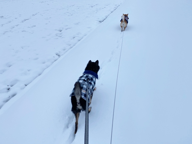 snow_1350.jpg