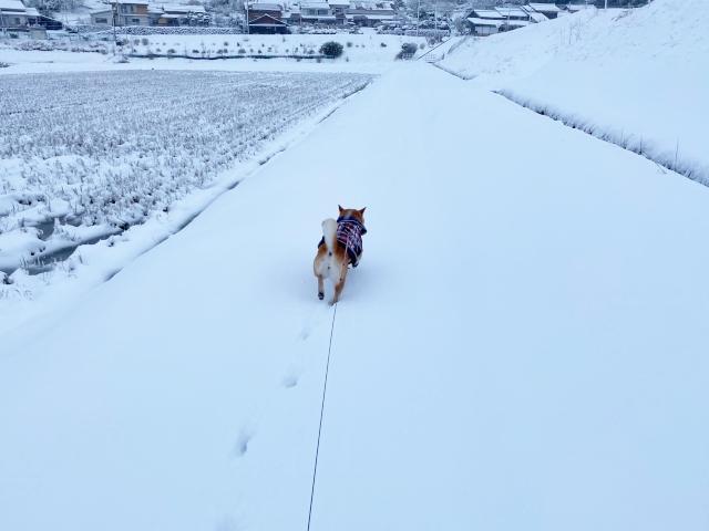 snow_1355.jpg