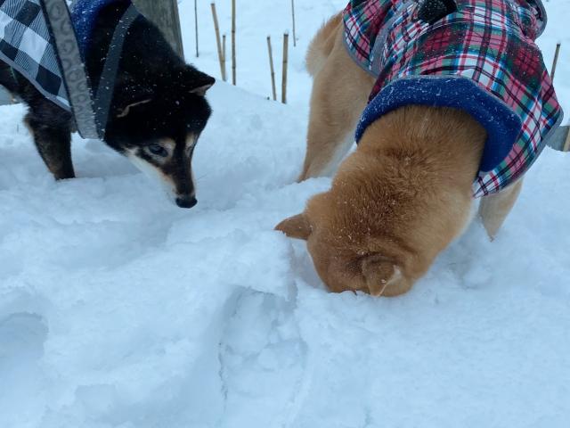 snow_1367.jpg