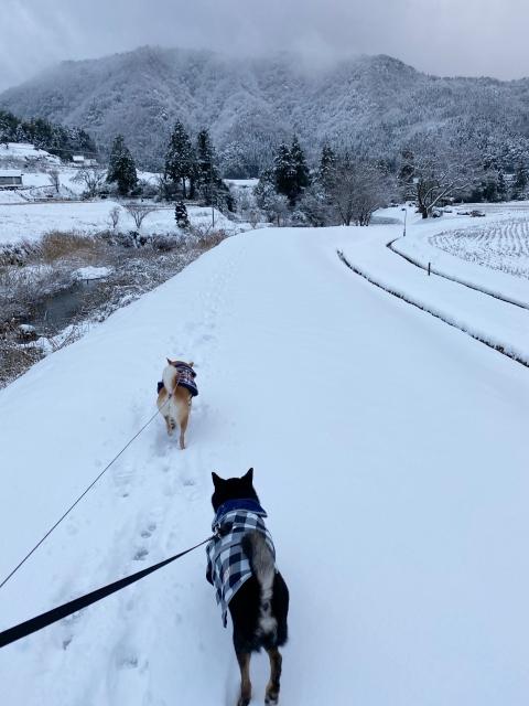 snow_1377.jpg