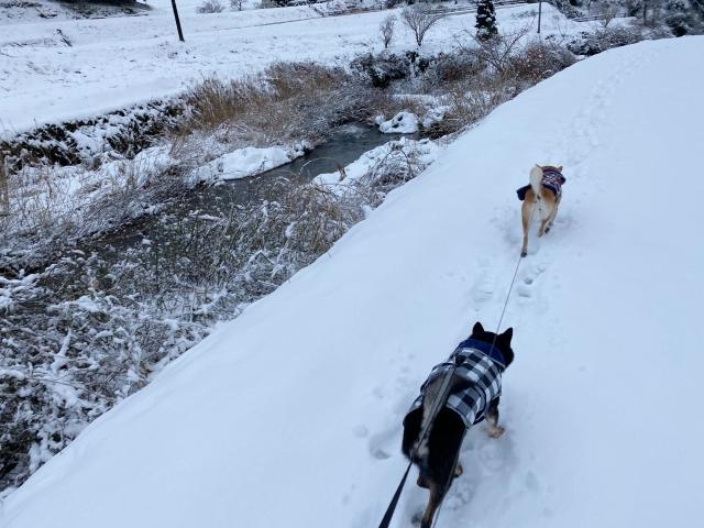 snow_1380.jpg