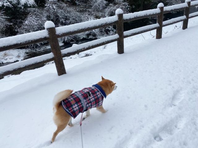 snow_1392.jpg