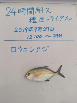 5_ロウニンアジ