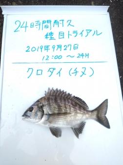 8_クロダイ(チヌ)