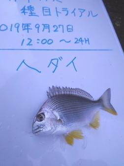 9_ヘダイ