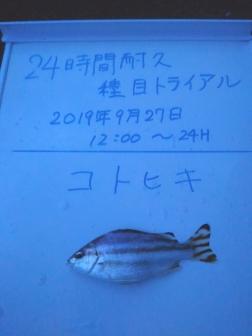 10_コトヒキ