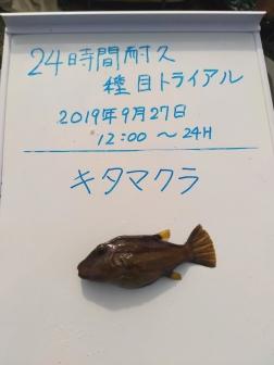15_キタマクラ