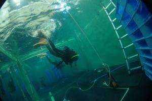 ダイビングプールで浮力チェック (3)