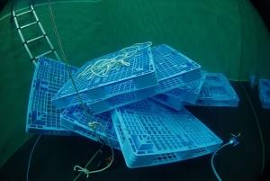 プラパレ水中沈む浮く (1)