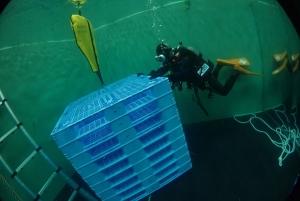 プラパレ水中沈む浮く (8)