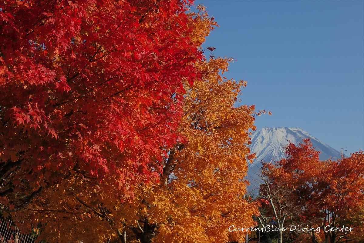 3本栖湖ダイビング富士山紅葉もみじ西白井レジャー (1)