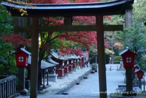 6本栖湖ダイビング浅間神社,白井市レジャー (12)