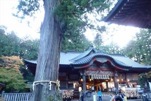 6本栖湖ダイビング浅間神社,白井市レジャー (8)