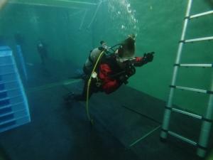 ダイビングライセンス取得コースプール実習自社プール (2)