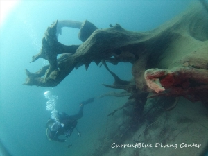 4本栖湖ダイビングツアーおすすめ世界遺産ダイビング (4)