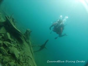 4本栖湖ダイビングツアーおすすめ世界遺産ダイビング (2)